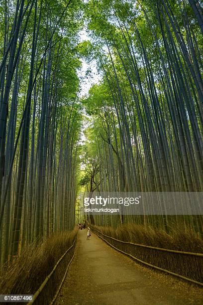 walking at famous arashiyama bamboo  forest in sagano kyoto japan - arashiyama stock pictures, royalty-free photos & images