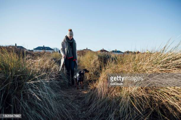 walking at the beach - pet clothing stock pictures, royalty-free photos & images