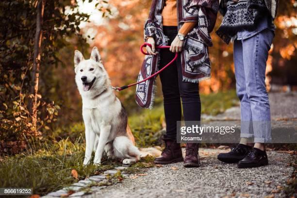 美しい犬そり旅行者を歩く