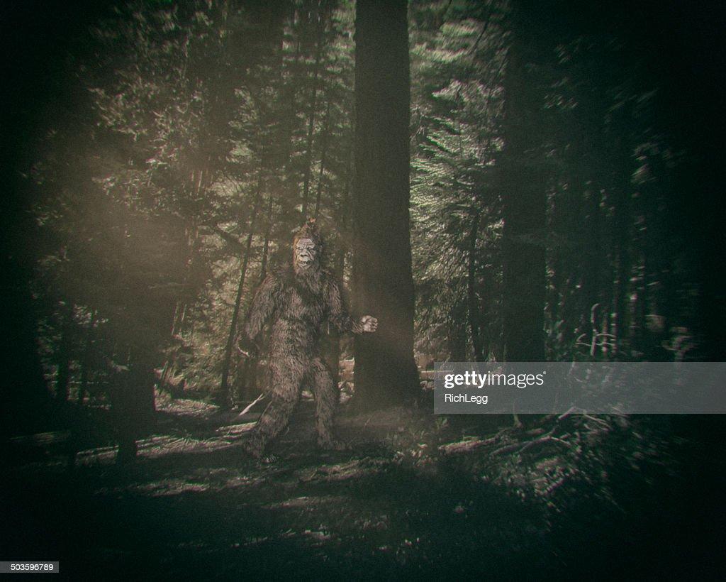 Walking Bigfoot : Stock Photo