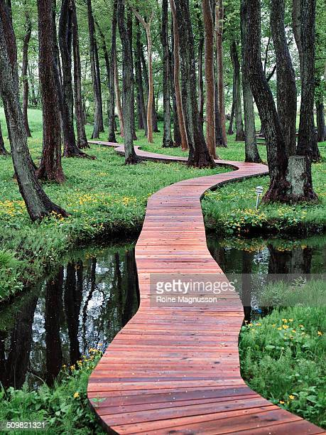 walking bridge in forest