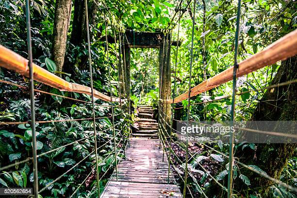 walking bridge in jungle, costa rica - robb reece bildbanksfoton och bilder