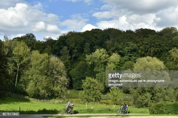 Walking by bicycle  in front of majestic beech tree forest