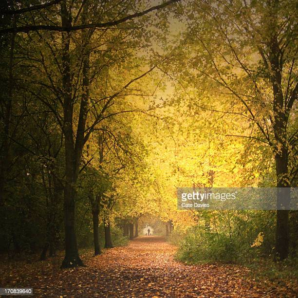 walking dogs along autumn path through forest - suffolk england stock photos and pictures