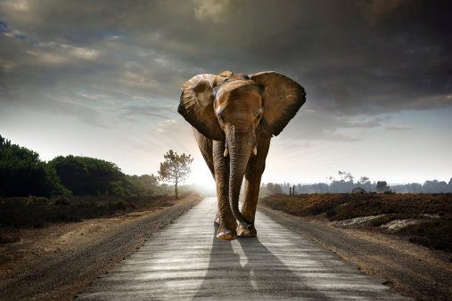 Walking Elephant 135156425