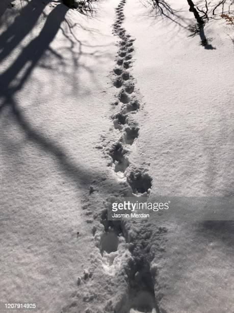 walking feet in snow mountain forest - jasmin sturm stock-fotos und bilder