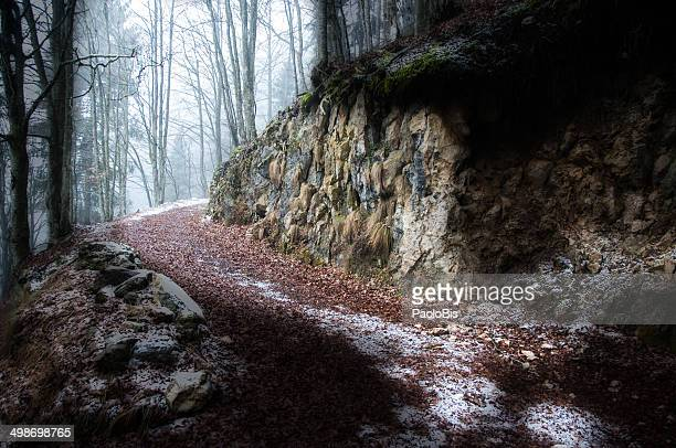 Walking in a winter wood, Croce d'Aune