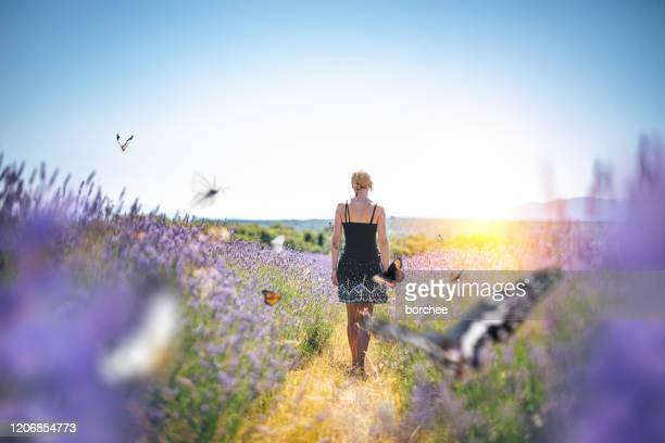 walking in lavender field - lepidoptera stock pictures, royalty-free photos & images