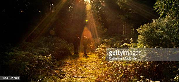 walking in rays of light - catherine macbride stock pictures, royalty-free photos & images