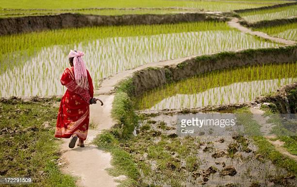 walking in rice