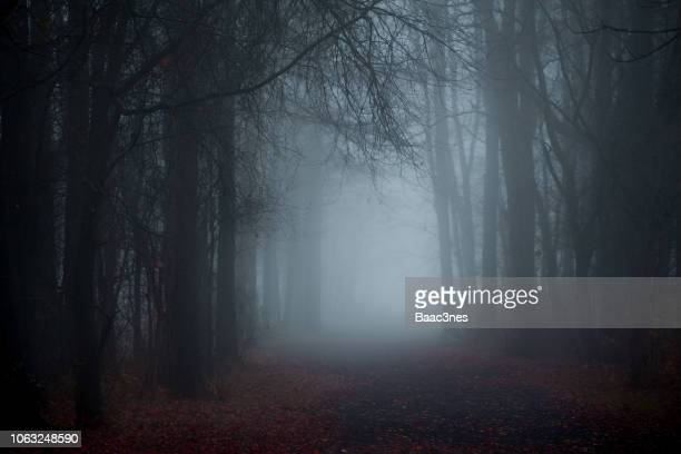 walking in the forest on a dirt road one foggy morning - spooky stock pictures, royalty-free photos & images