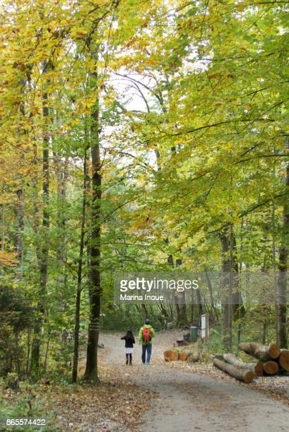 walking in the forest - inoue stock photos and pictures