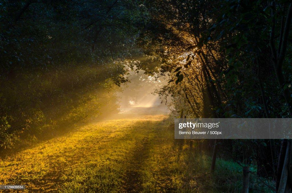 Walking Into The Morninglight : Stock Photo
