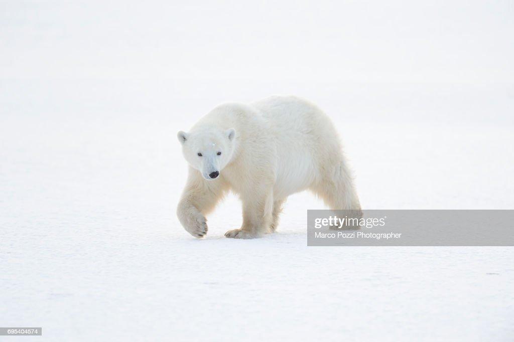 walking on ice : Stock Photo