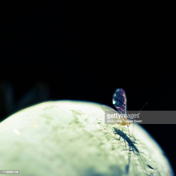 walking on moon - s0ulsurfing stock pictures, royalty-free photos & images