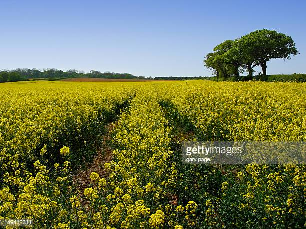walking on sunshine - bedfordshire stock photos and pictures