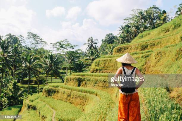 walking over the rice fields in indonesia - indonesian culture stock pictures, royalty-free photos & images