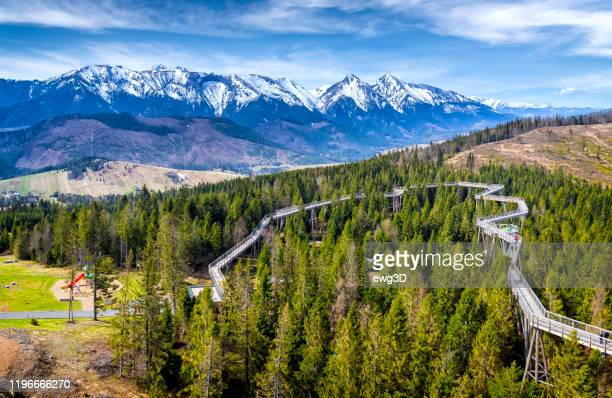 walking path among the trees in zdiar, slovakia - slovakia stock pictures, royalty-free photos & images