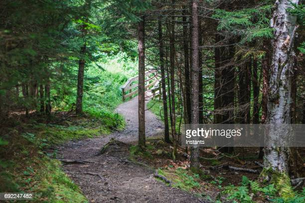 Walking path in Fundy National Park, in the Maritime province of New Brunswick.