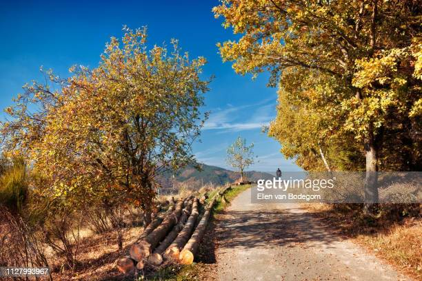 walking path in sunny and colourful autumn forest, germany - north rhine westphalia stock pictures, royalty-free photos & images