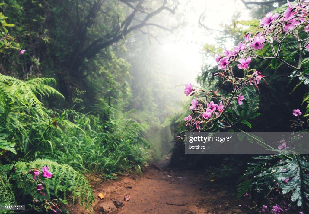 Walking Path On Madeira Island : Stock Photo