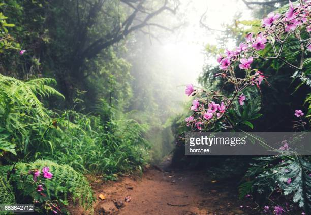 walking path on madeira island - lareira stock pictures, royalty-free photos & images