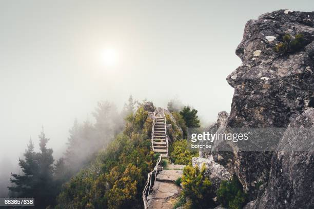 walking path on madeira island - madeira island stock photos and pictures