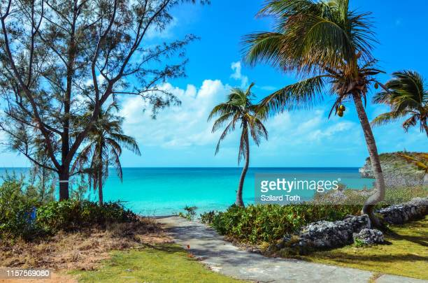walking path to a tropical beach on the island eleuthera on the bahamas - ナッソー ストックフォトと画像