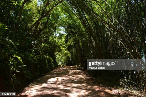 Walking path to Forte Defensor, Paraty, Rio de Janeiro