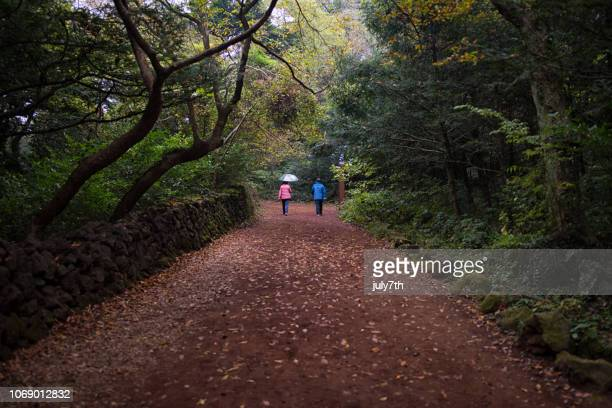 walking rain forest in jeju island - hallasan stock photos and pictures