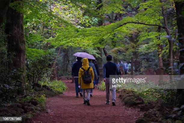 walking rain forest, 제주도 비자림 - hallasan stock photos and pictures
