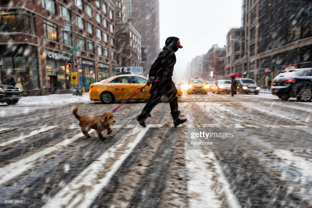 walking the dog in snow storm : Stock Photo