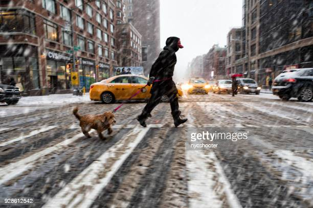 walking the dog in snow storm - sleet stock photos and pictures