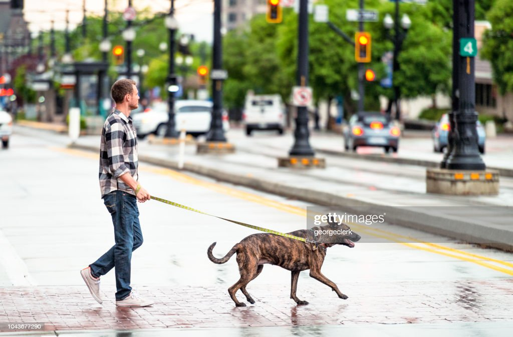 Walking The Dog In The Rain Stock Photo - Getty Images