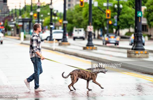 walking the dog in the rain - salt lake city utah stock photos and pictures