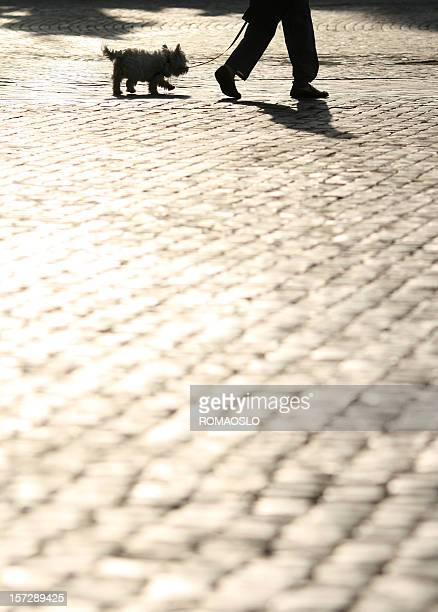 Walking the dog on cobblestone in Rome, Italy