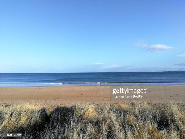 walking the dog on dornoch beach - lucinda lee stock pictures, royalty-free photos & images