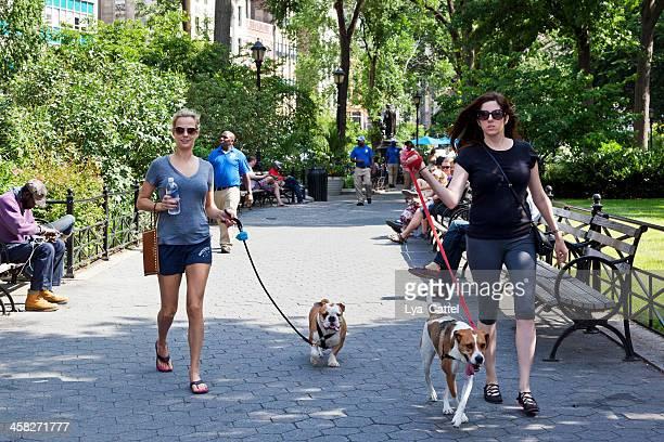 犬の散歩、 - ユニオンスクエア ストックフォトと画像