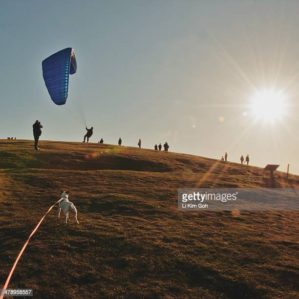 walking the dog - アフィントン ストックフォトと画像