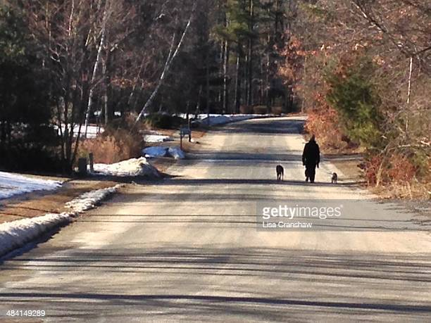 walking the dog - lisa cranshaw stock pictures, royalty-free photos & images