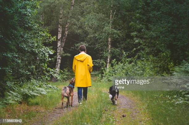 walking the dogs in the swedish woods - nordic countries stock pictures, royalty-free photos & images