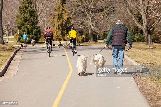 walking the dogs - london ontario stock photos and pictures