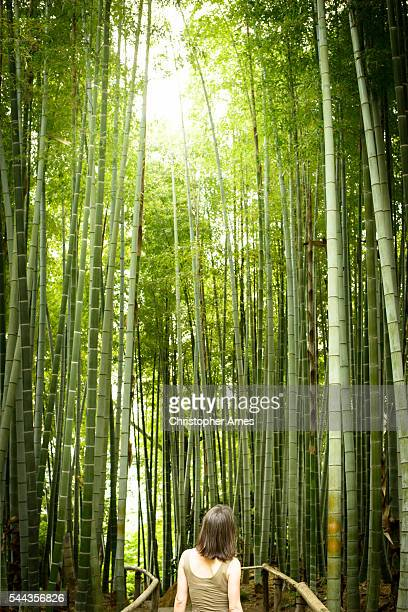 Walking Through a Bamboo Forest