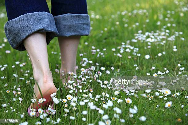 Walking through a daisy meadow