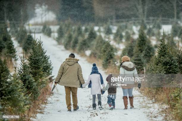 walking through a field - country christmas stock pictures, royalty-free photos & images