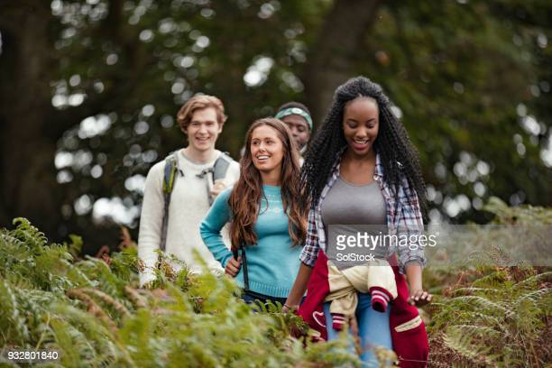 walking through the forest - cumbria stock photos and pictures