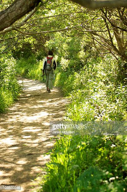 walking through the trees at andrew molera state park, california. - state park stock pictures, royalty-free photos & images