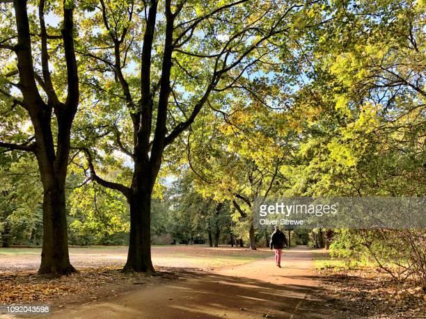 dirt trackrunning thrugh middle tiergarten park