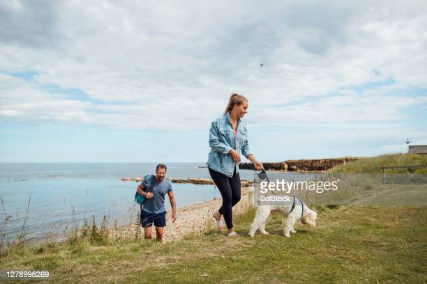 walking to the beach with the dog - dog walking stock pictures, royalty-free photos & images