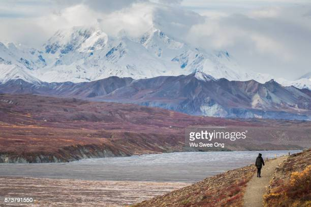 Walking Trail in Denali National Park Wilderness